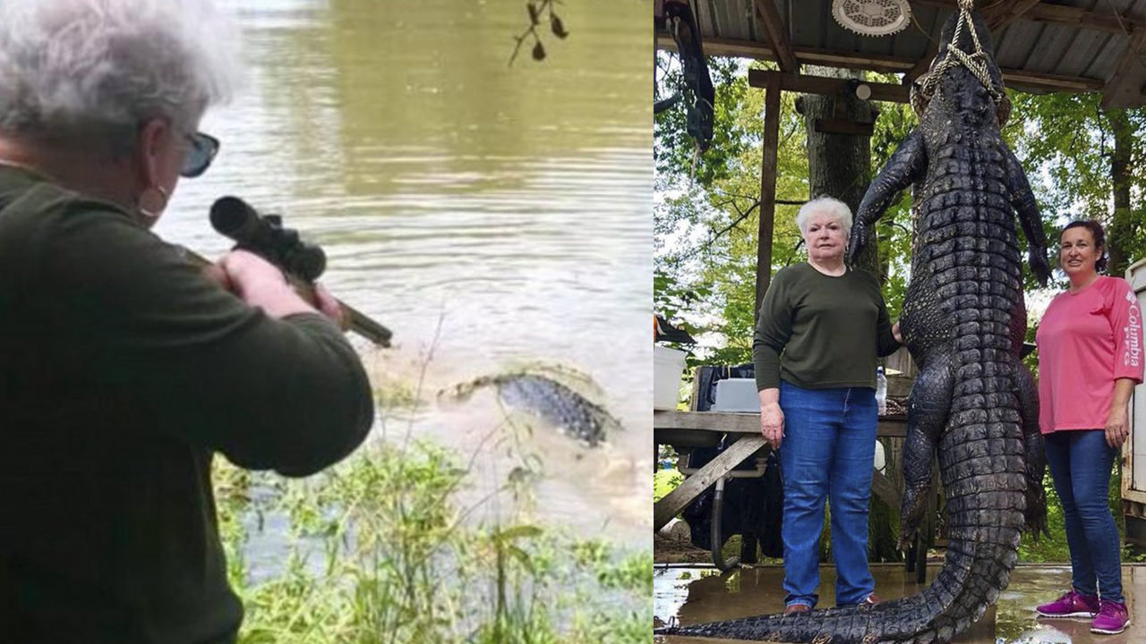 Great Grandma Kills 12 Foot Alligator Says It Ate Her