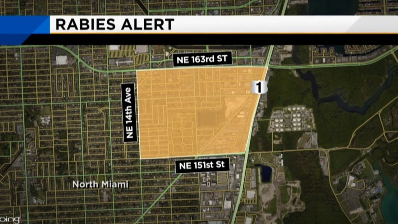 Cat tests positive for rabies in North Miami Beach