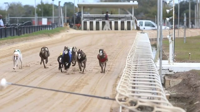 Florida dog racing supporters challenge amendment constitutionally