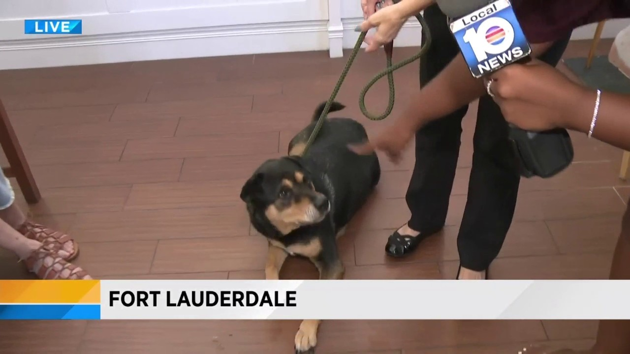 Have you heard of Black Furrday? The Humane Society of Broward...