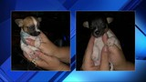 Puppies survive woman's alleged abuse in Broward