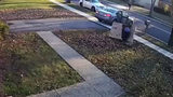 Too tough to handle, 'porch pirate' struggles with TV box he stole