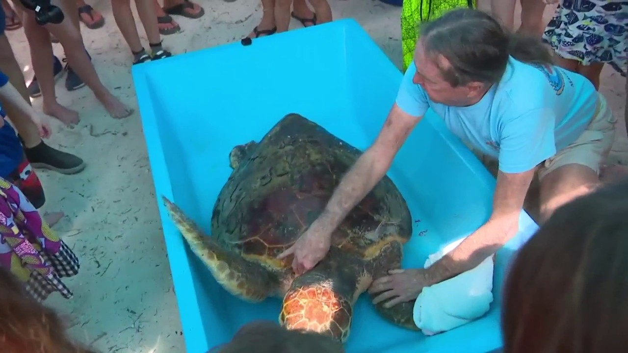 Sea turtle released back into ocean months after being found injured off Florida Keys