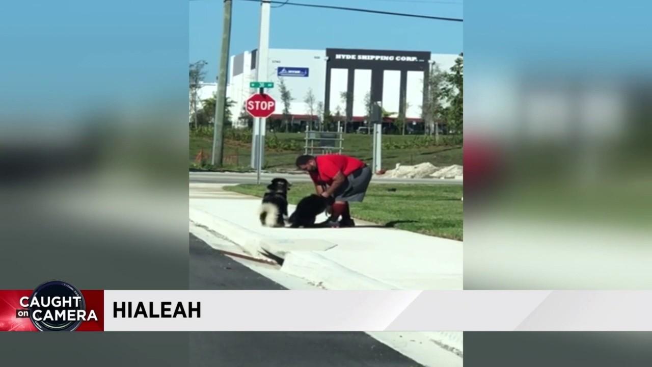 Video shows man abusing Siberian Husky in Hialeah, police say