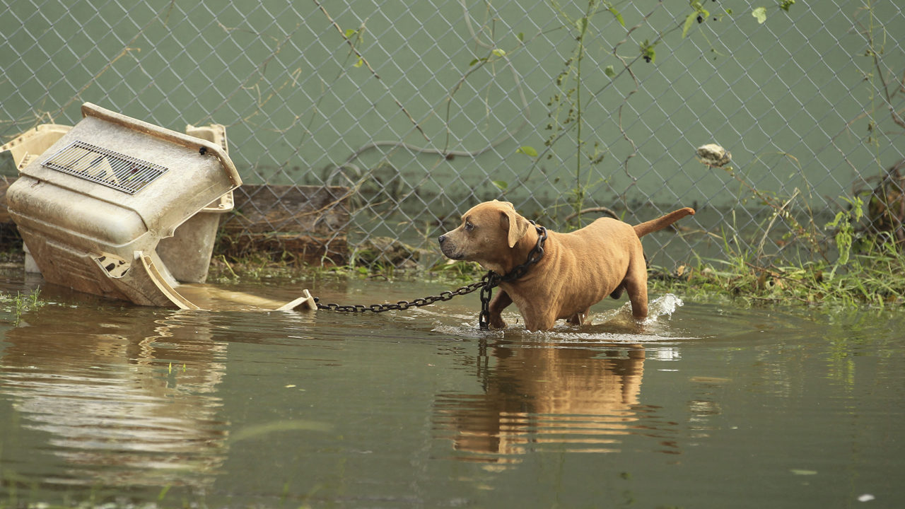 New bill would punish owners who leave pets during hurricanes