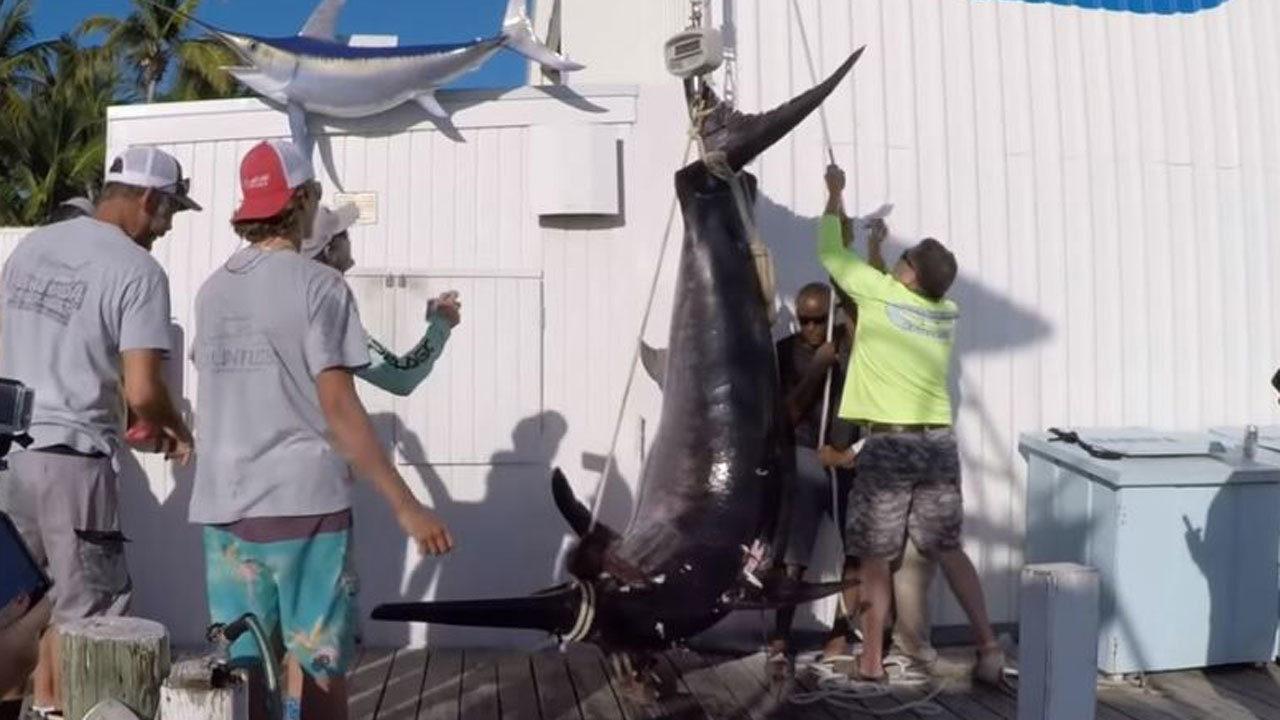 Islamorada fishing boat captain reels in 757-pound swordfish