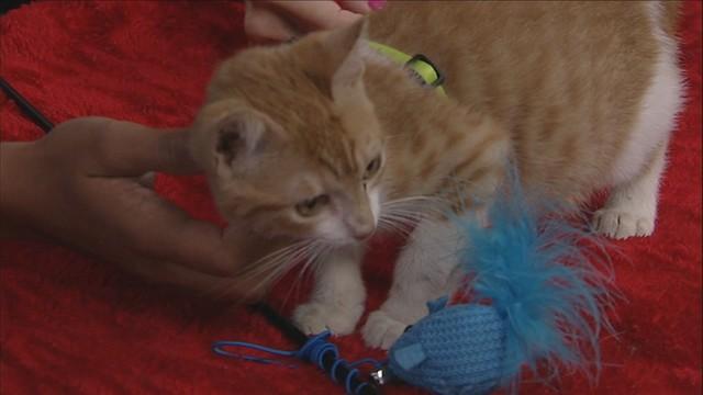 Adopt a pet: Meet Louis