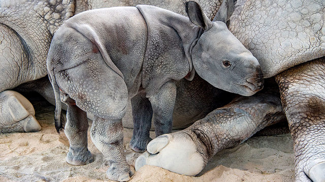 Photos: ZooMiami has a new baby