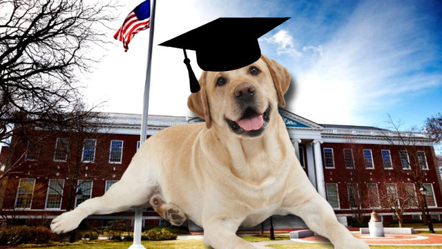 Sit. Study. Fetch a bachelor's degree in dog training.