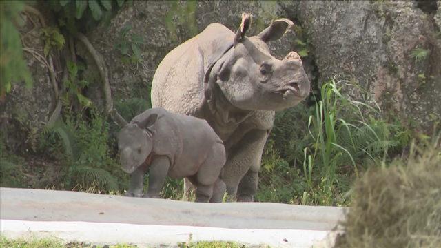 Baby rhino makes public debut at Zoo Miami