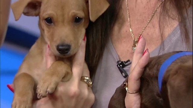 Adopt a pet: Meet the Humane Society newest arrivals