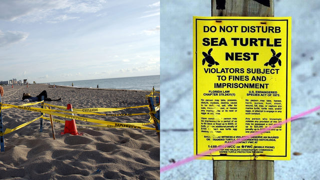 Woman arrested for disturbing sea turtle nest on Miami Beach