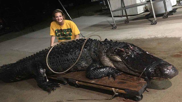 Giant gator wanders onto Florida interstate, stopping traffic