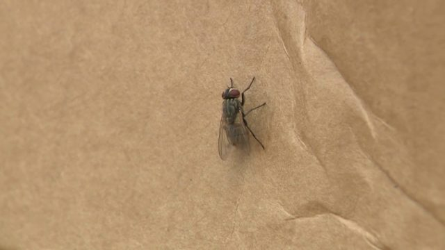 South Florida restaurants being ordered shut due to flies