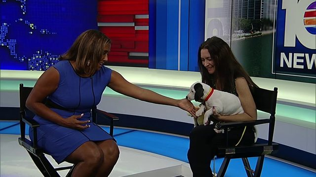 Meet August, an adorable puppy available for adoption
