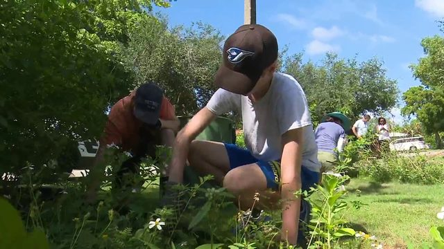 New Florida law allows residents to plant fruits, veggies in their front lawns