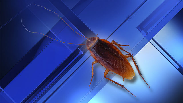 Cockroaches will soon be impossible to kill