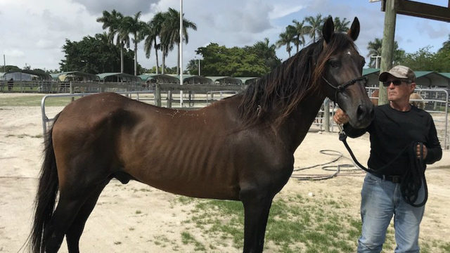 Authorities looking for owner of runaway horse