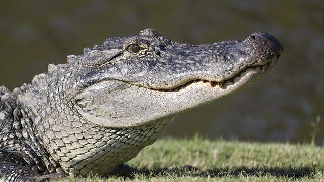 Police warn of 'meth-gators' due to flushing drugs down toilets