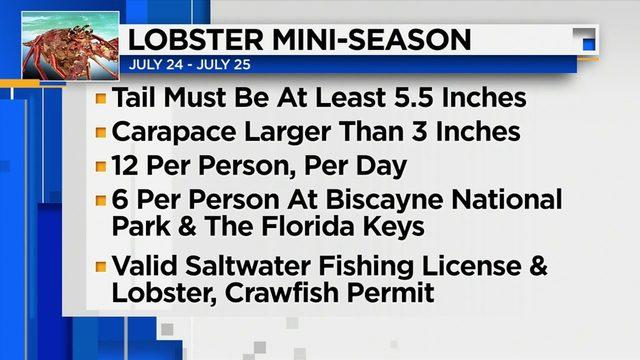 Lobster mini-season starts at midnight