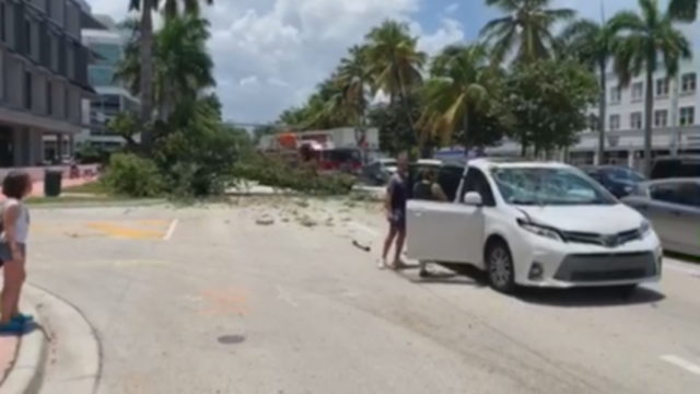 Tree falls on family's moving van in South Beach