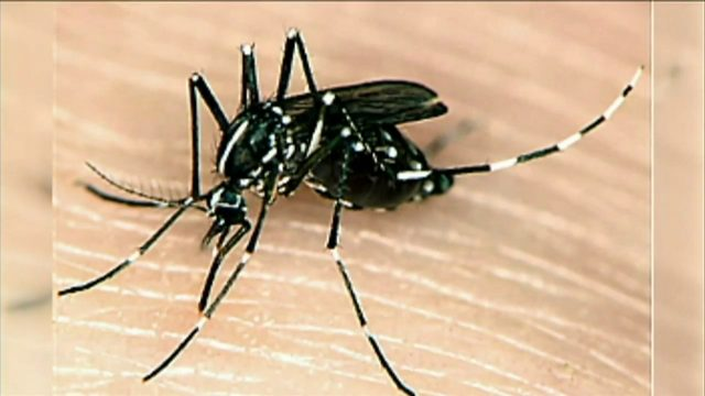 How South Floridians can prevent contracting dengue
