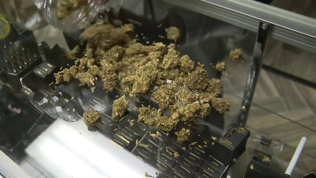 Miami-Dade to no longer prosecute minor marijuana cases