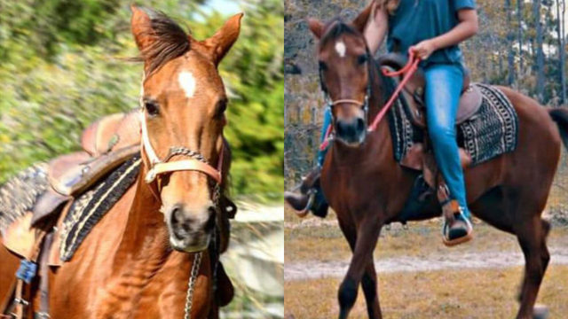 Animal advocates search for stolen horse in Miami-Dade