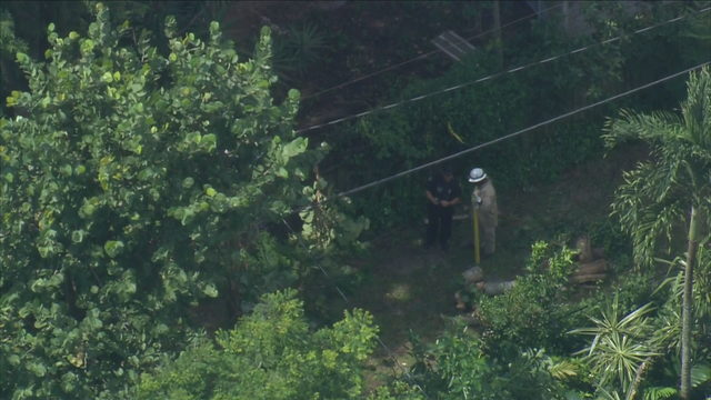 Tree service worker shocked by power line in Fort Lauderdale