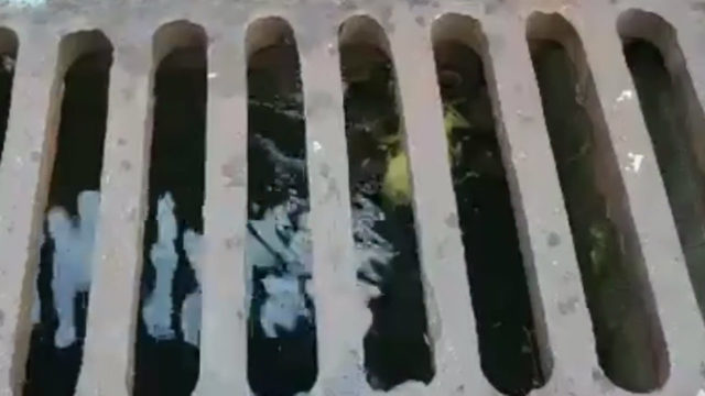 Ducklings rescued after falling through storm drain grate in Weston