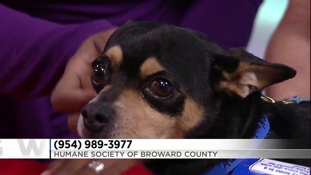 Adopt a Pet: Sept. 17, 2019