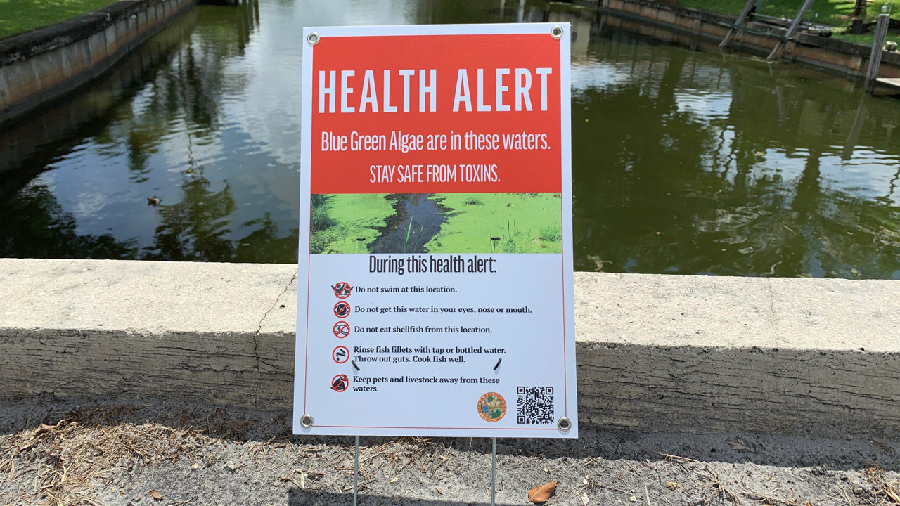 Harmful blue-green algae found in Plantation waterways