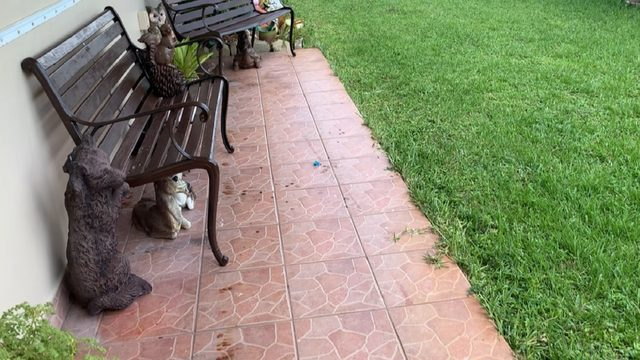 Boy, 2, released from hospital after being attacked by dog in Pembroke Pines
