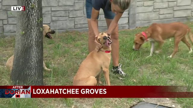 Dogs rescued in Bahamas arrive in South Florida