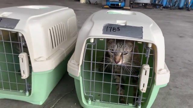 Video of cat rescued from Bahamian animal shelter