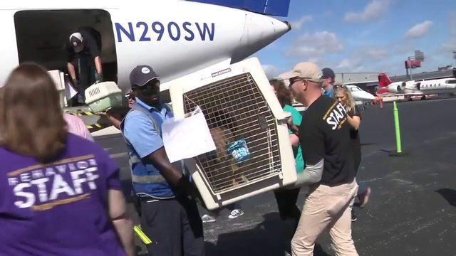 Dozens of dogs, cats from Bahamas arrive in South Florida
