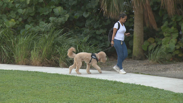Desecration by defecation? Some say sacred Miami site has gone to the dogs