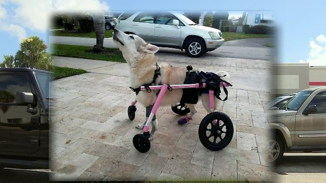 Car stolen with disabled dog inside, owner says