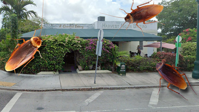 Live roaches found at 'gourmet eatery' in Miami Springs