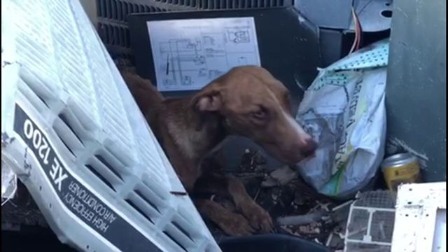 Rescuers save dog trapped in rubble after Hurricane Dorian hit Bahamas