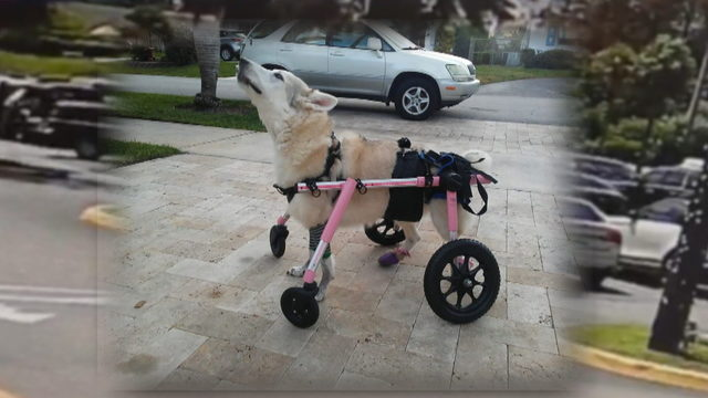 Disabled dog missing since Thursday found dead