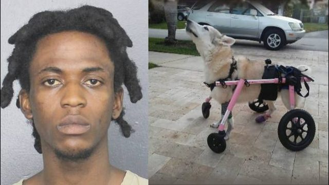 Arrest made in car theft that led to disabled dog's death