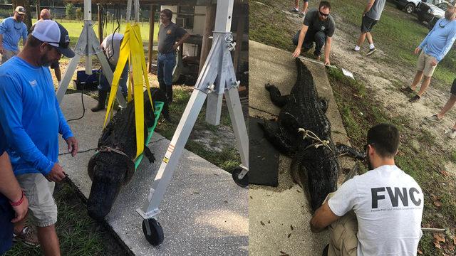 Hunters from Texas set Florida gator hunting record