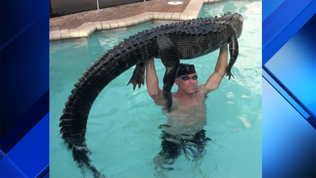 Man swims with, rescues 'mellow' 9-foot gator in Parkland pool