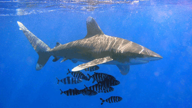 Shark rips off woman's hands in attack on whale-watching trip