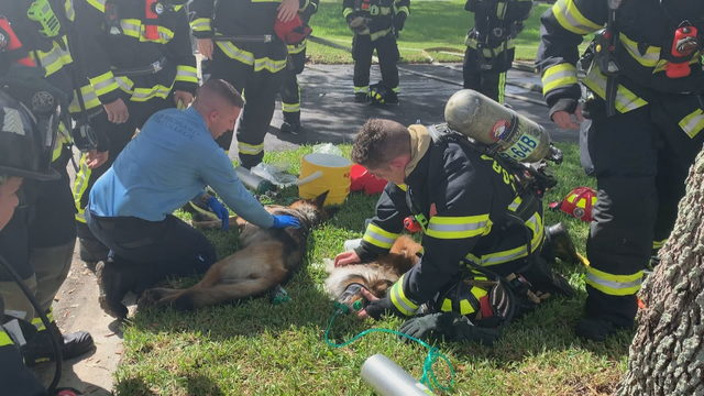 Dogs rescued from house fire in Coral Springs