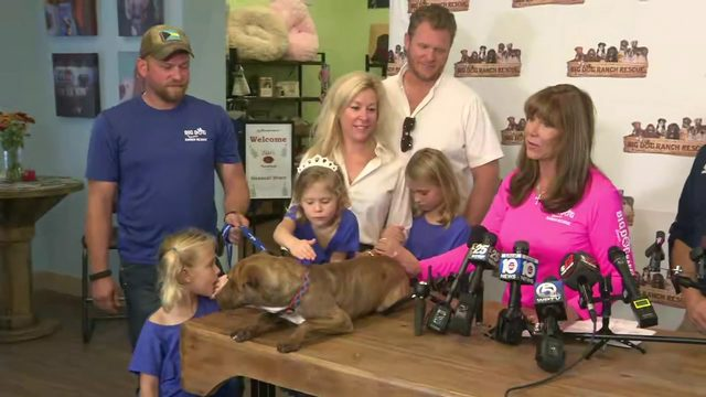 Dog rescued from Bahamas after Hurricane Dorian gets new family