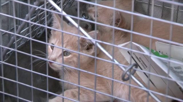 Cats being poisoned in Miami condo complex, residents say