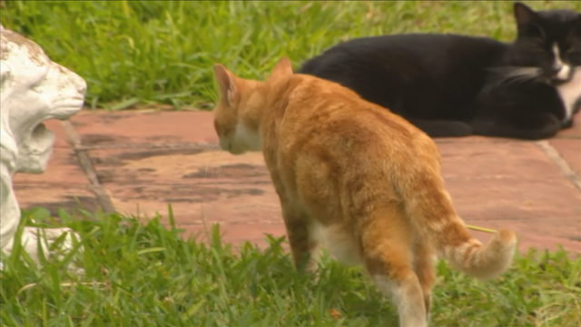 Miami-Dade Animal Services offering money to help control cat population