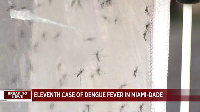 Eleventh case of mosquito-borne illness confirmed in Miami-Dade